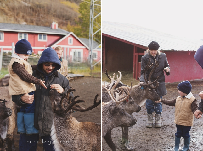 Visiting the Williams Reindeer Farm in Palmer, Alaska. Things to do in Palmer, Alaska. Things to do in the MatSu Valley. Scenic Alaska. Places to visit in Alaska. Family fun in Palmer, Alaska. Nature studies.